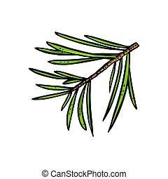 色, branch., 白, 型, 針, ベクトル, 彫版, 隔離された