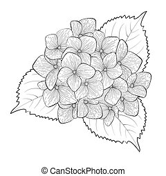 花, アジサイ, 隔離された, 黒, 白, モノクローム