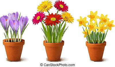 花, カラフルである, 春, ポット