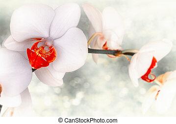 花, ライト, バックグラウンド。, クローズアップ, 背景, 白い花, 蘭