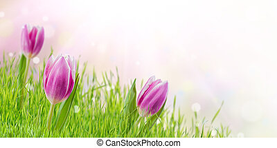 花, 春, 背景, 草