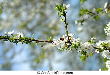 花, 木, アップル, 蜂