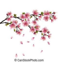 花, 桜の木, sakura, 日本語