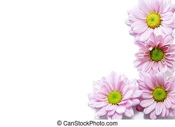花, 背景, 白