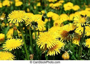 花, 芸術, 背景, 黄色, 春, 美しい