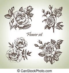 花, set., 手, ばら, イラスト, 引かれる