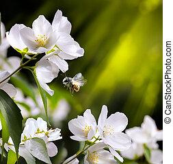 芸術, 春, 背景, 飛行, 花, 蜂