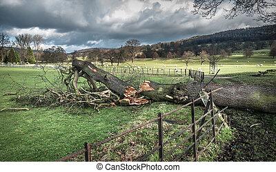 落ちた木, 損害