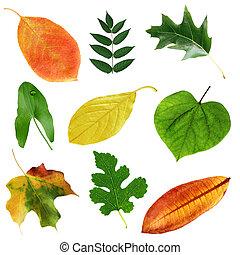 葉, コレクション