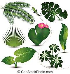 葉, コレクション, トロピカル