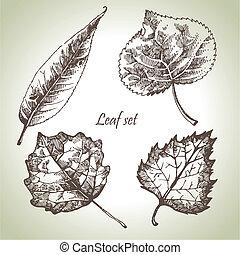 葉, セット, 手, 引かれる