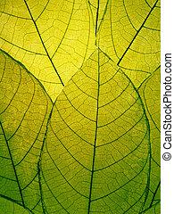葉, デリケートである, 細部, 緑