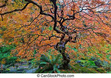 葉, レース, 木, 日本語, 秋, かえで, 庭