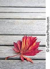 葉, 日本語, ベンチ, 木, かえで, 背景, 赤