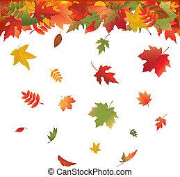 葉, 落ちる