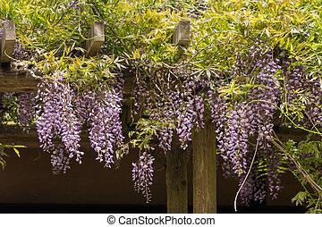藤, 花, 花, 日本語