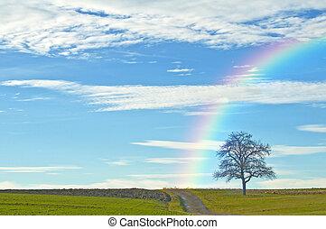虹, はげ, 木, 方法