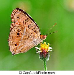 蝶, 供給, 花