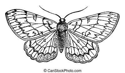 蝶, 型, イラスト