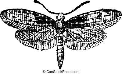 蝶, 彫版, moth, 型, brassolis, ∥あるいは∥, liphyra