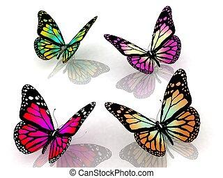 蝶, 白い背景