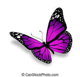 蝶, 白, 隔離された, 背景, すみれ