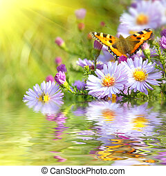 蝶, 花, 反射, 2