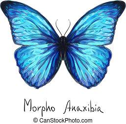 蝶, anaxibia., 水彩画, imitation., morpho