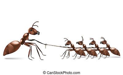 蟻, ロープ, 引く
