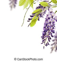 装飾用である, 藤, 角度, 葉, 要素, 花, バックグラウンド。, 緑の白, ボーダー, 上に, ページ