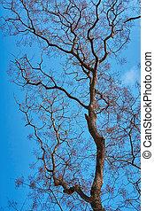 裸, 空, に対して, 木