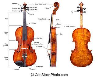 解剖学, (english), バイオリン