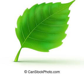 詳しい, 緑の葉