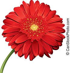 詳しい, 花