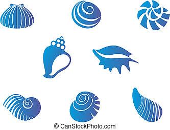貝殻, セット