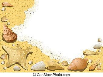 貝殻, 砂, 背景