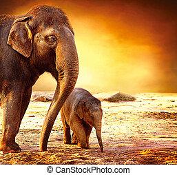 赤ん坊, 母, 屋外で, 象
