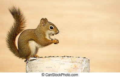 赤ん坊, squirrel.