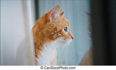 赤, 座っている猫, カーテン