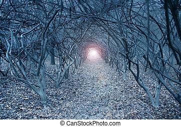 超現実的, 音を弱められた, arch-like, 木, dreamlike, 森