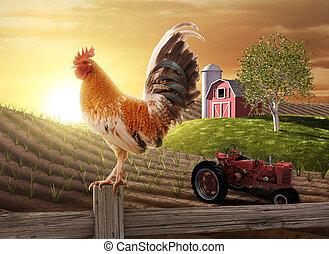 農場, 国, 朝
