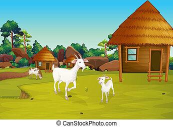 農場, nipa, 小屋