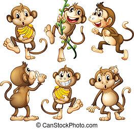 遊び好きである, 野生, 猿