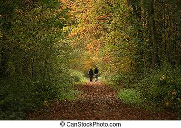 道, 森林, 歩行者