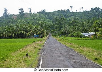 道, havelock, 島, india), ジャングル, (andaman, によって, 島