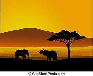 野生生物, アフリカ