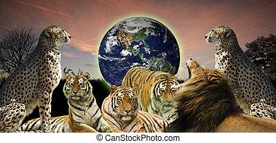 野生生物, 概念, 人間, イメージ, 井戸, それ, 創造的, 惑星, belongs, それら, 動物, 保護, 地球