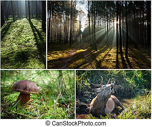 野生, 動物群, 植物相, 森林