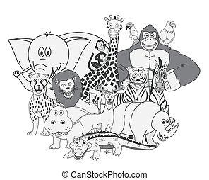 野生 動物, グループ, ショー