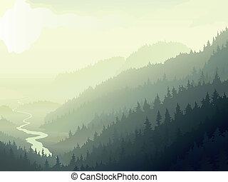 野生, 霧が深い, wood., 球果を結ぶ